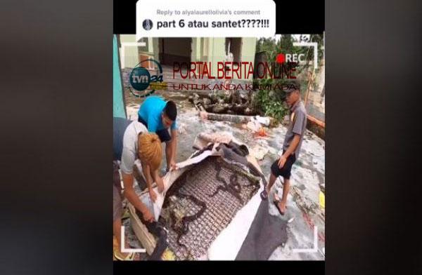Seram! Kasur Tak Terpakai Ini Jadi Sarang Puluhan Ular Kobra