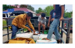 Terciduk! Ratusan Kg Daging Rusa Hendak Diselundupkan dari Labuan Bajo